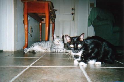 mycats.jpg